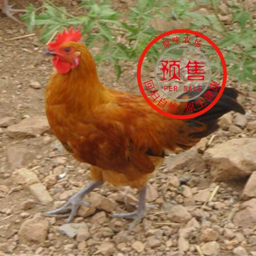 蟠龙湖原味农场公鸡(约2斤)